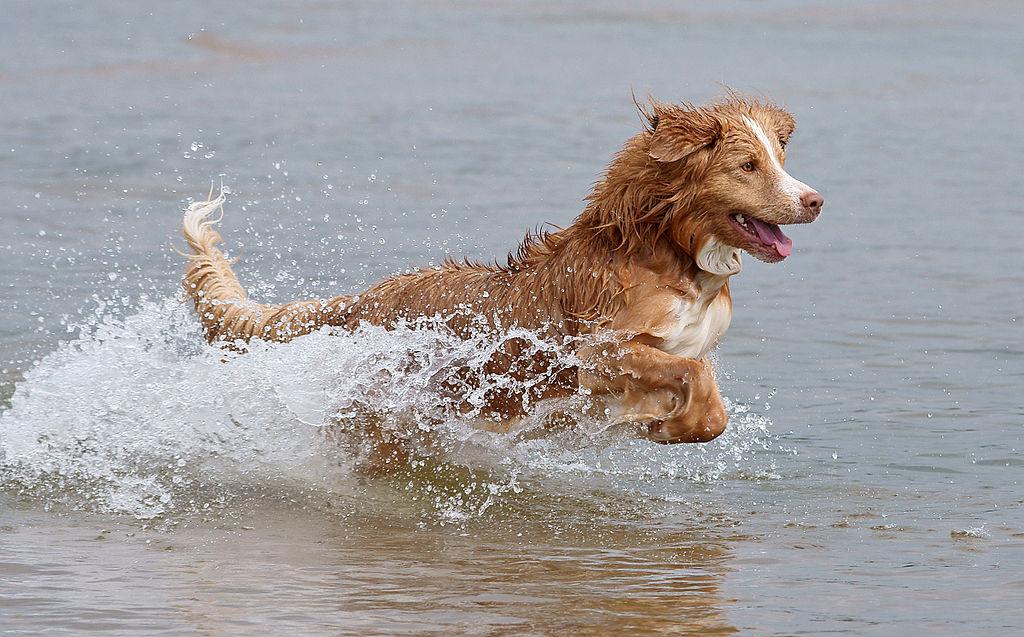 Pour la santé de votre chien, pensez à faire un tour sur le site vetostore.com